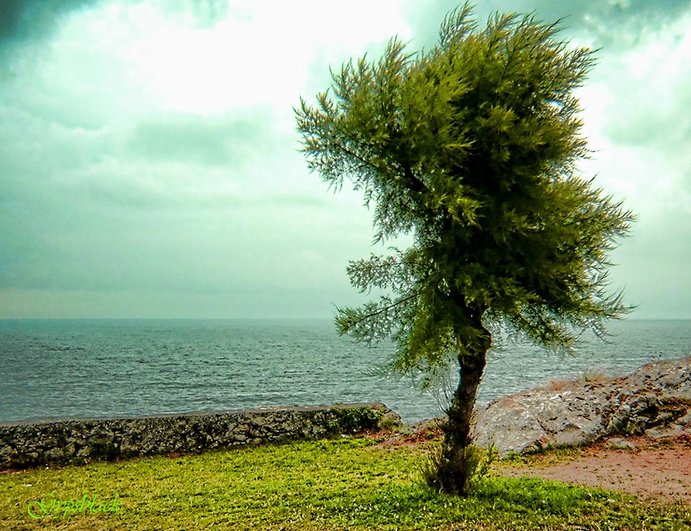 Tierra...Mar...Viento...