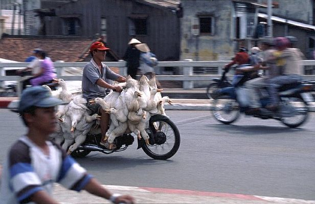 Tiertransport - Use in Vietnam