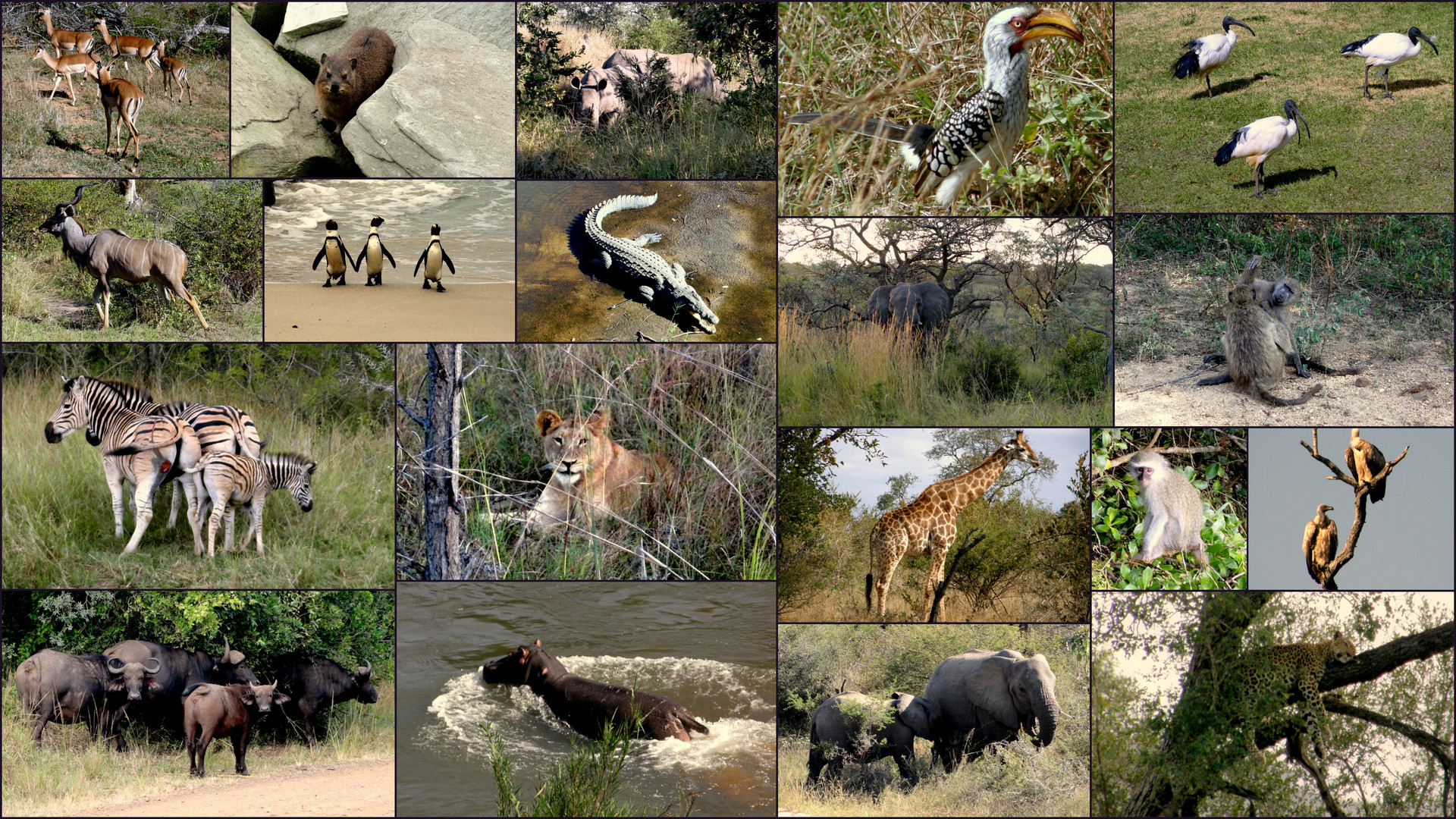 Tierwelt Südafrikas