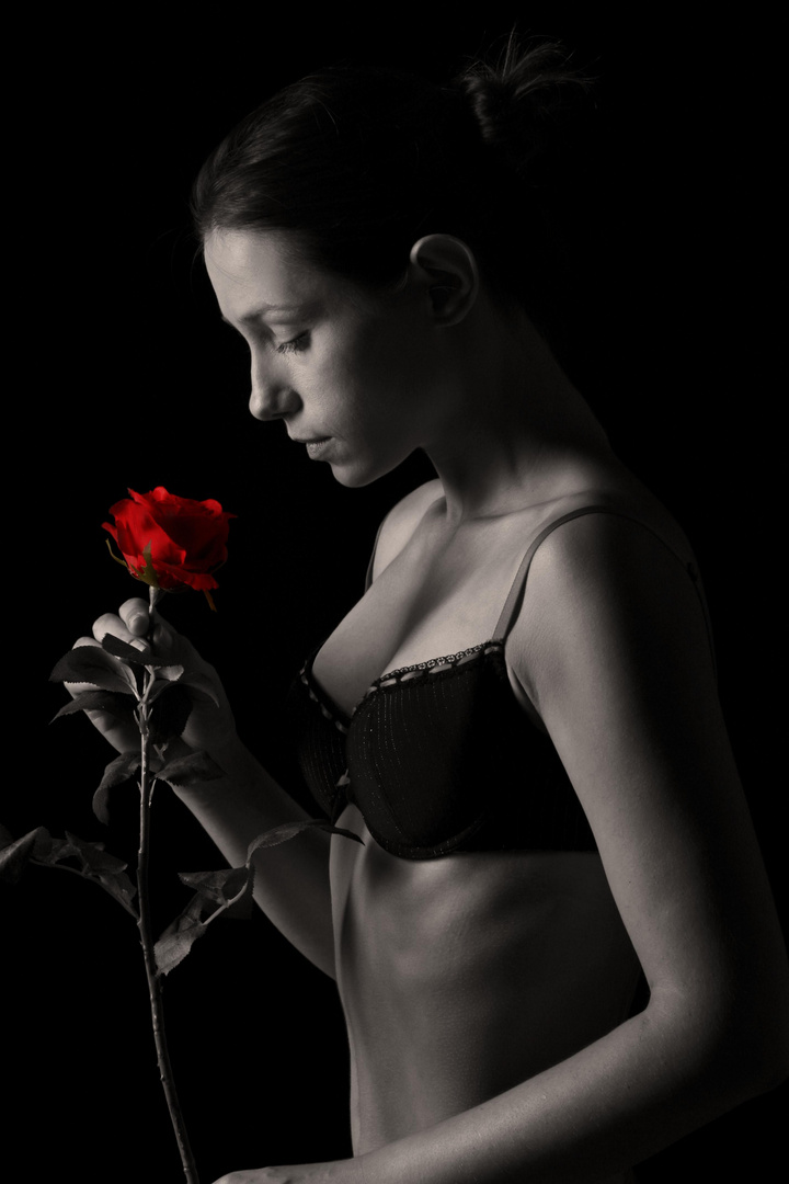 Tiff mit Rose