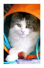Tiffy in ihrem schlaf und Spielzeugtunnel.
