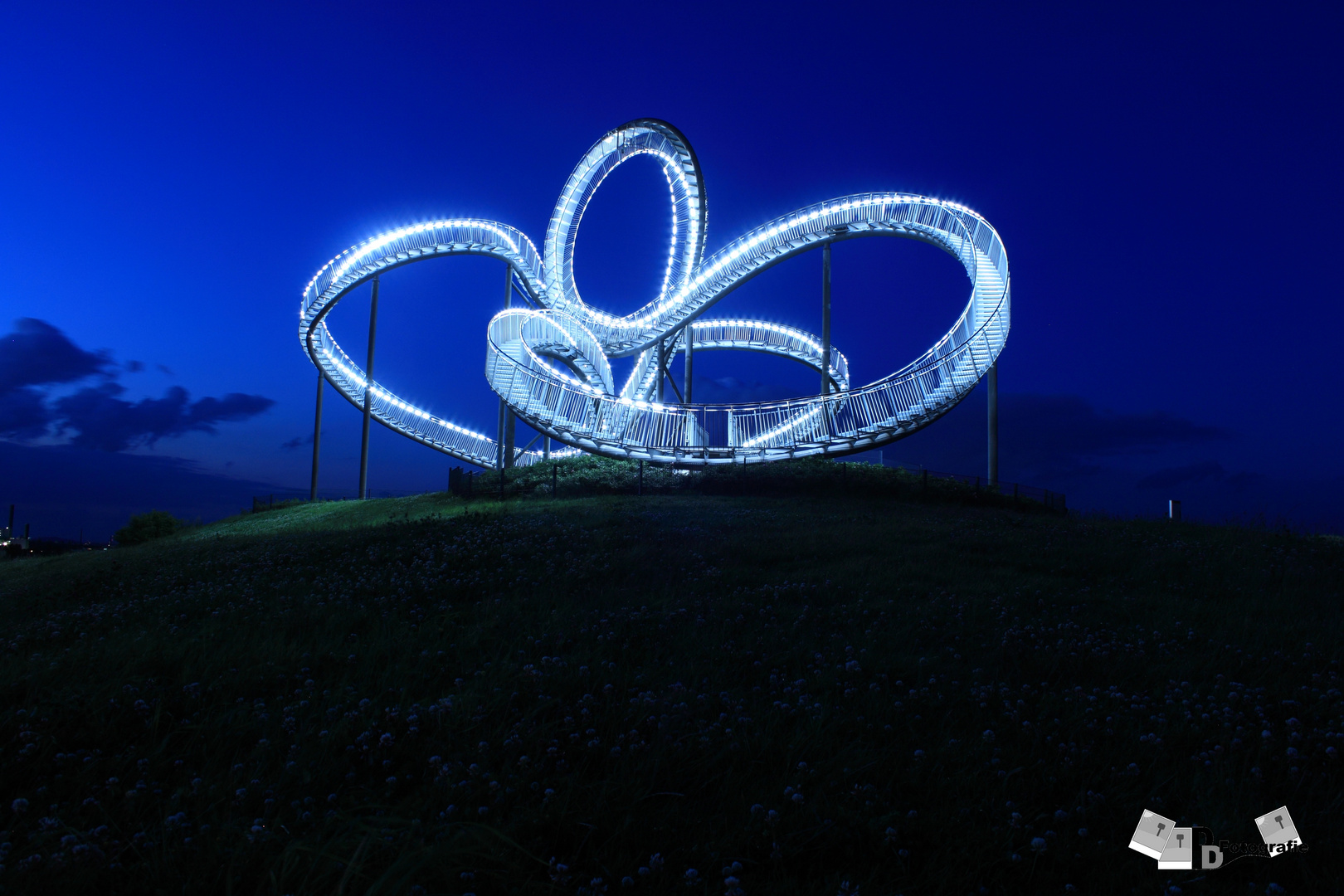 tiger and turtle