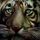 """"""" Tiger """""""