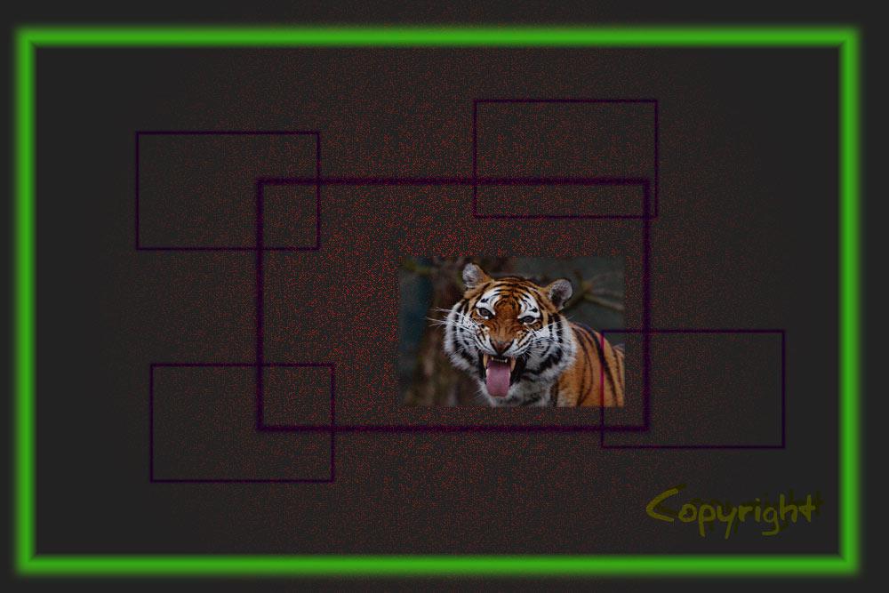 Tiger gut gerahmt