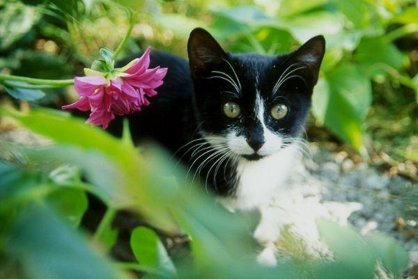 Tiger im Blumenbeet