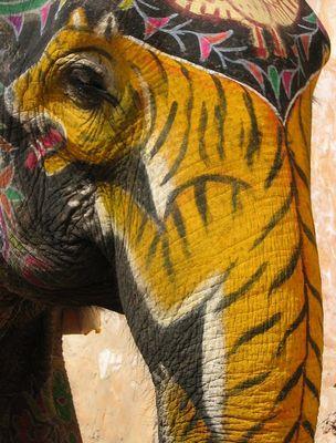 Tiger meets Elephant