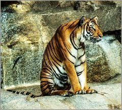 Tiger Nr.2