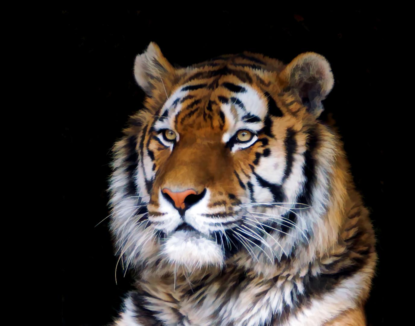 Tiger - Poster 1