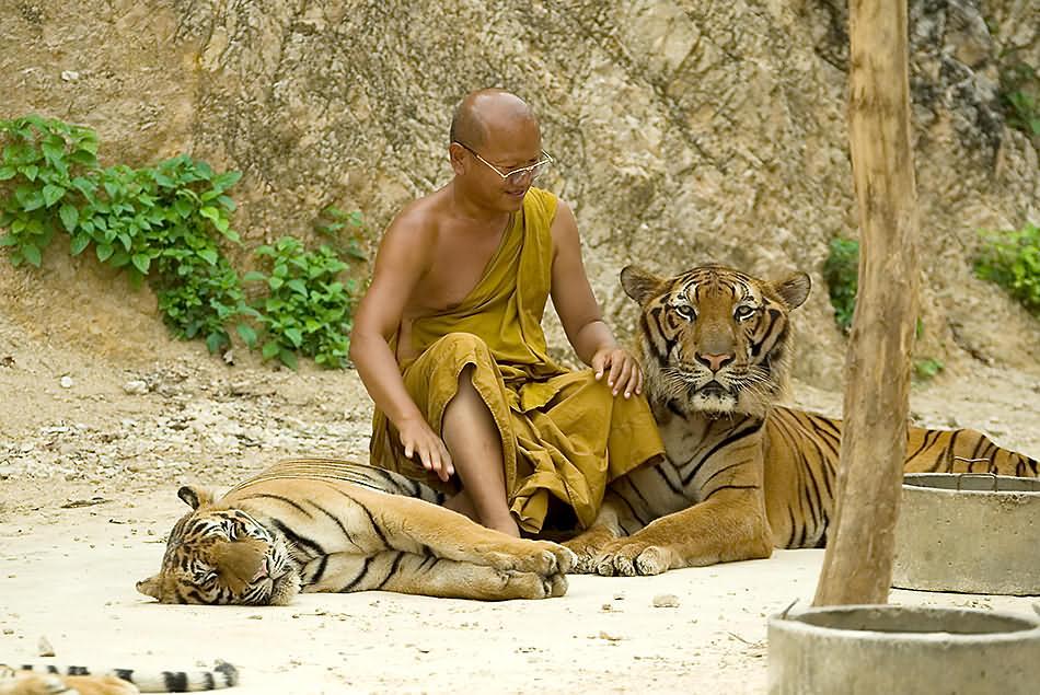 Tiger-Tempel 01v.5