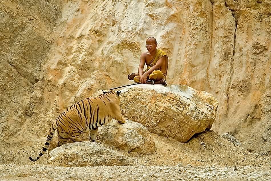Tiger-Tempel 03v.5
