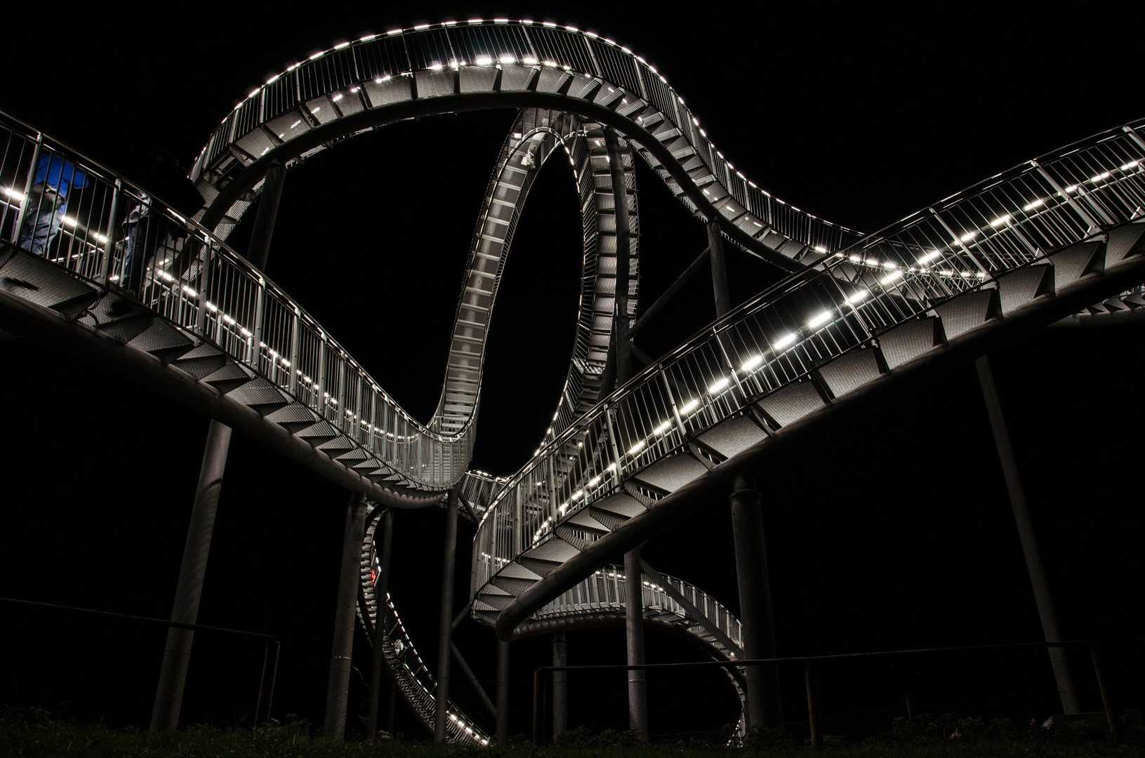 Tiger & Turtle by Night