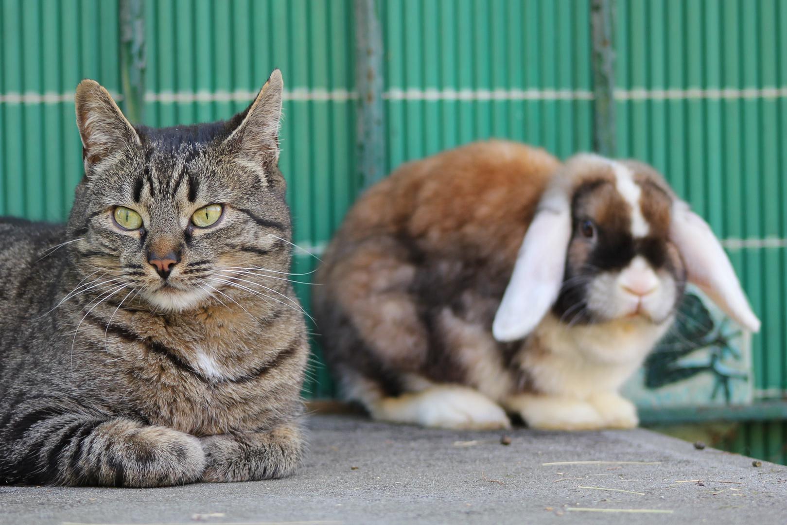 Tiger und Goldie bewachen Nachbars Hund...