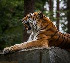 Tigerchen