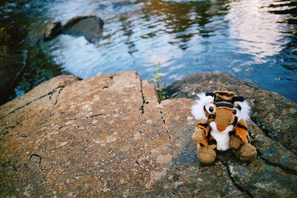 Tigerchen am Wasser