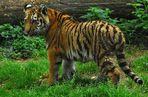 Tigerjugend