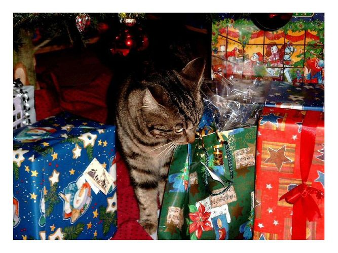 Tiger's Weihnachten