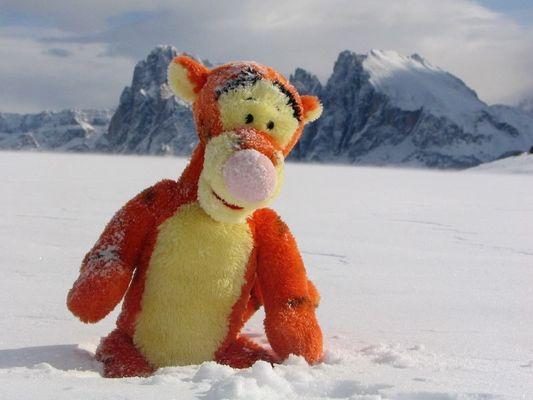 Tigger im Schnee