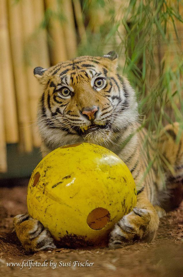 Tila... der neue Fußballstar :-)