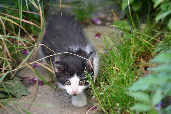 Tim auf der Pirsch im Garten - Teil 2