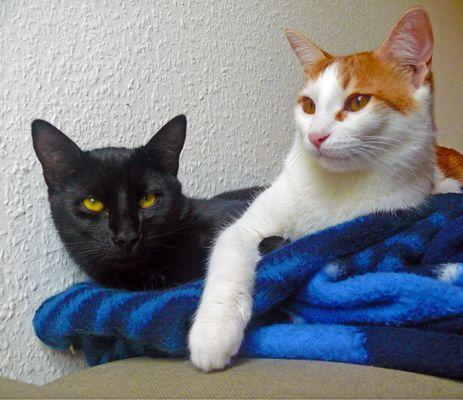 Timbaki & Grisu