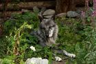 Timerbwolf