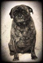 Timmy, mein Hund (Foto von Ingrid Pany, huschpfusch nacheditiert durch mich)