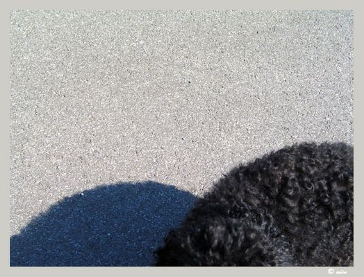 Timmy und sein Schatten
