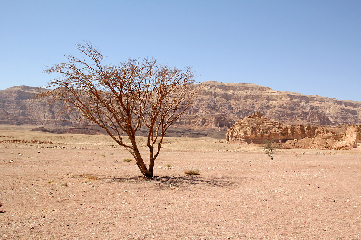 Timna Nationalpark in Eilat, Israel