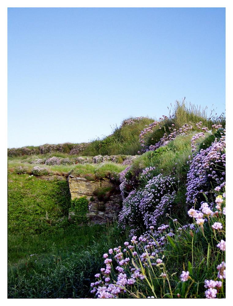 Tintagel Coast 3
