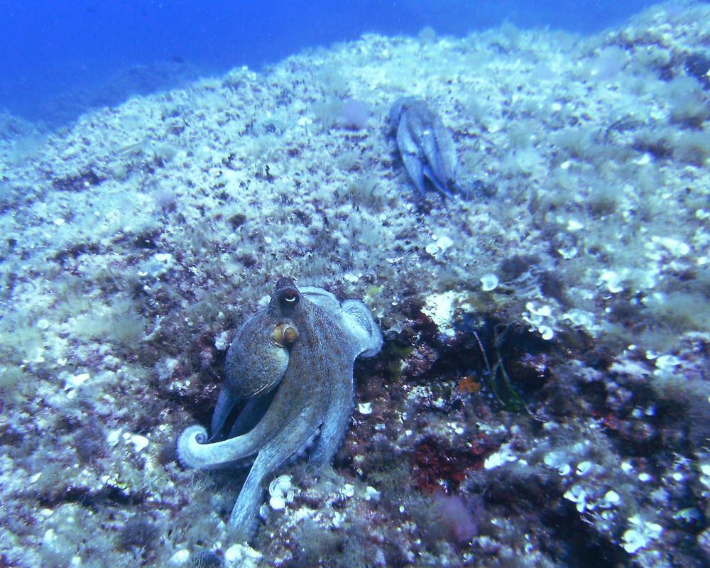 Tintenfische in Bewegung