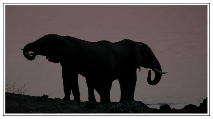 """""""Tintenklecks-Elefant"""""""