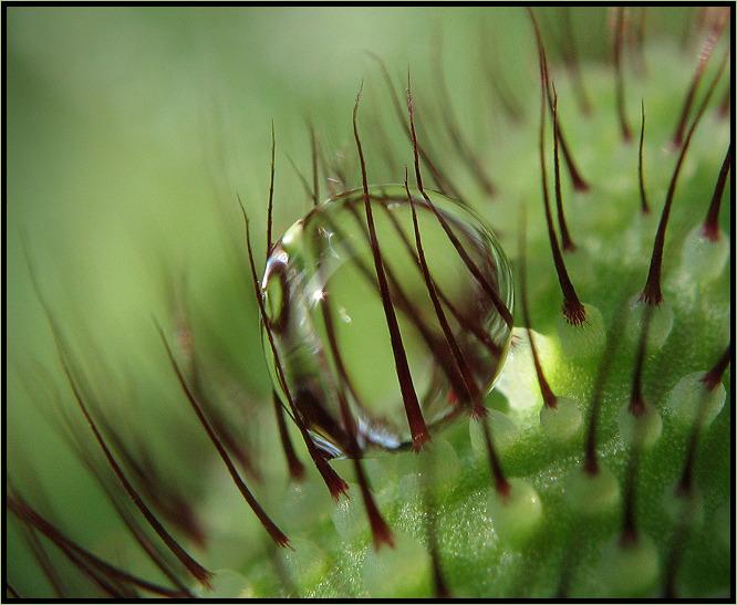 .. Tiny Beauty ..