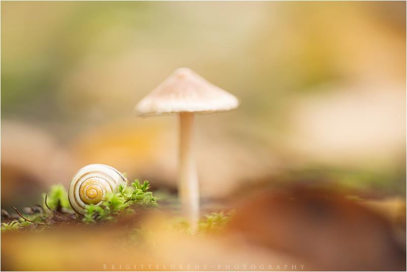 tiny landscape.....