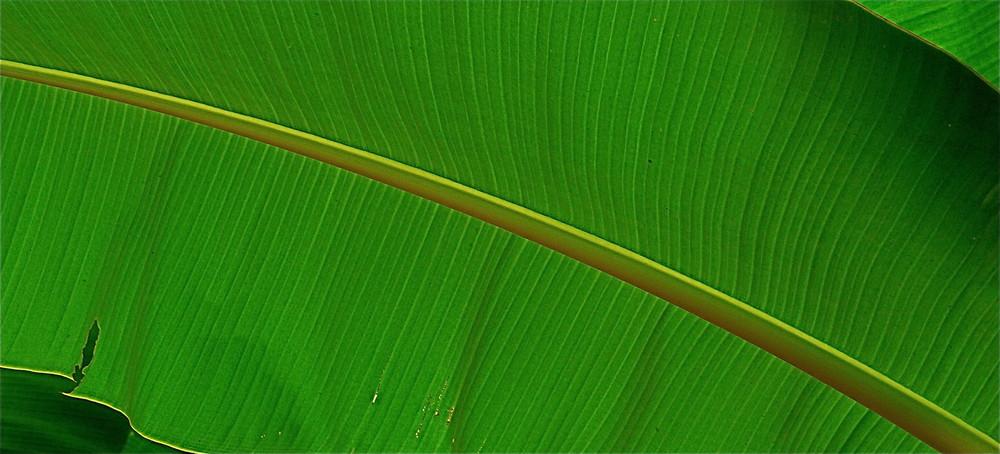 Tiralíneas en verde
