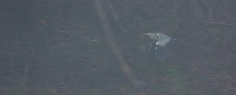 Tire d'ailes dans la brume...