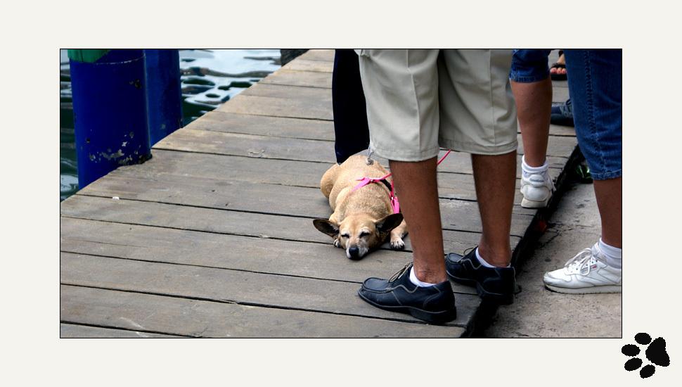 Tired dog in Venize