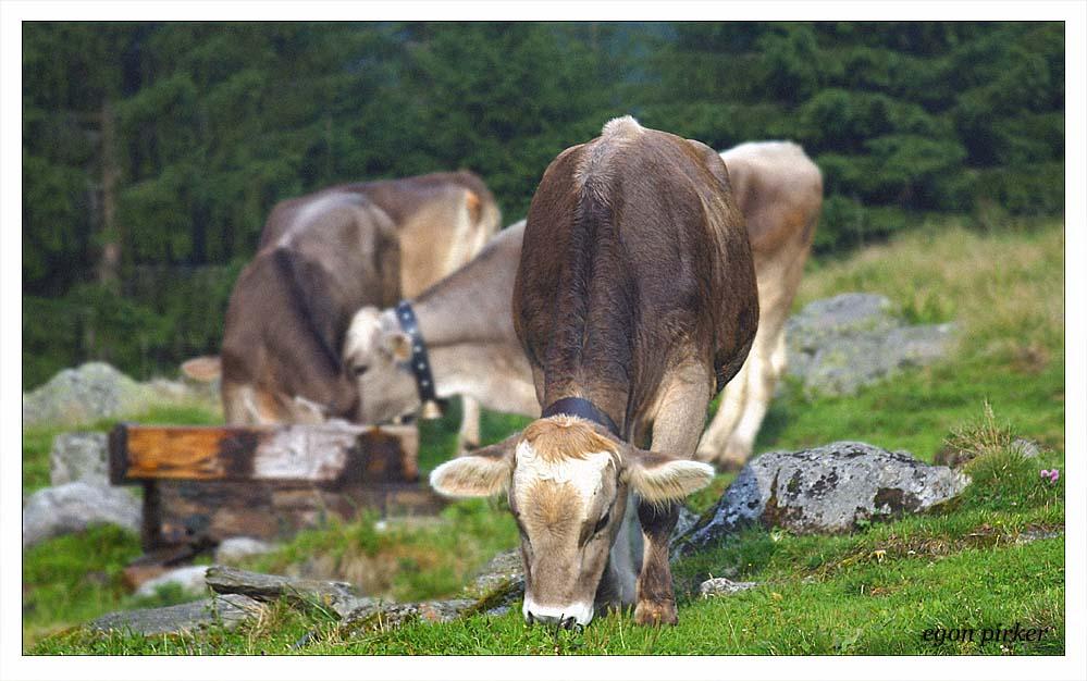 Tirol 050