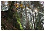 Tiroler Herbst (1)