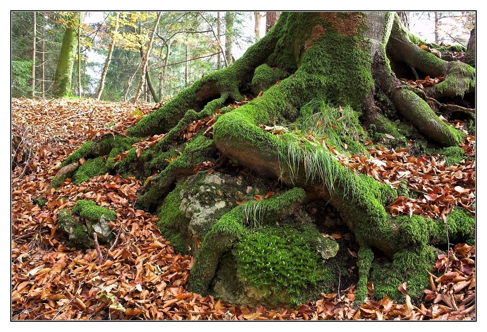 Tiroler Herbst (2)