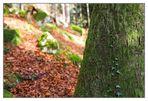 Tiroler Herbst (3)