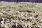 Tiroler Weiden....