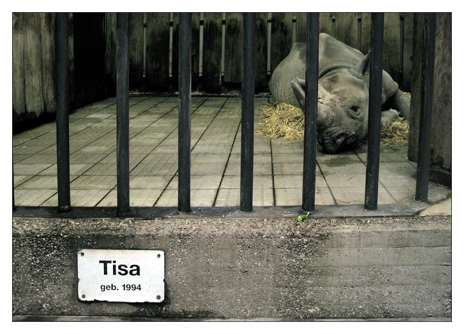 Tisa-Studie