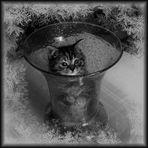 Titi dans le vase !