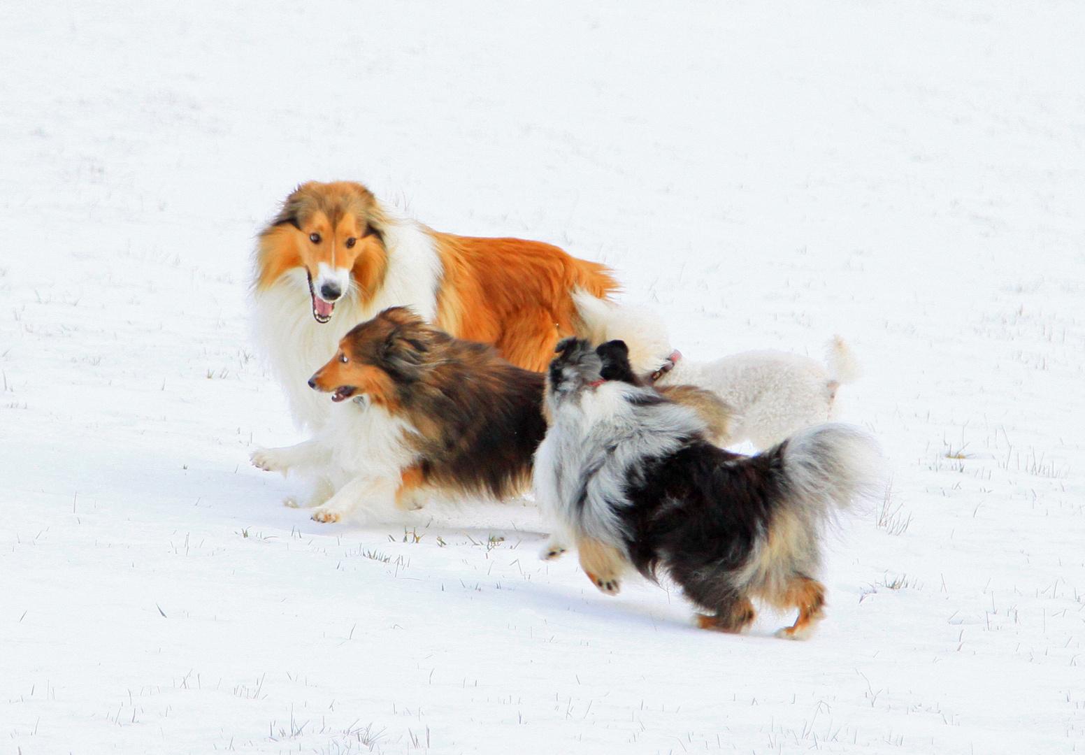 Toben im Schnee 1