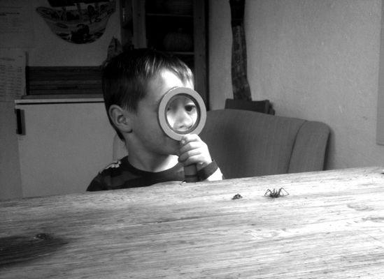 Tobi und die Spinne...