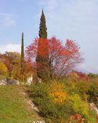 Tocchi di autunno