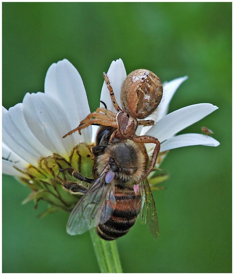 Tod einer Honigbiene