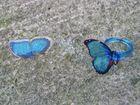 Tod eines Schmetterlings