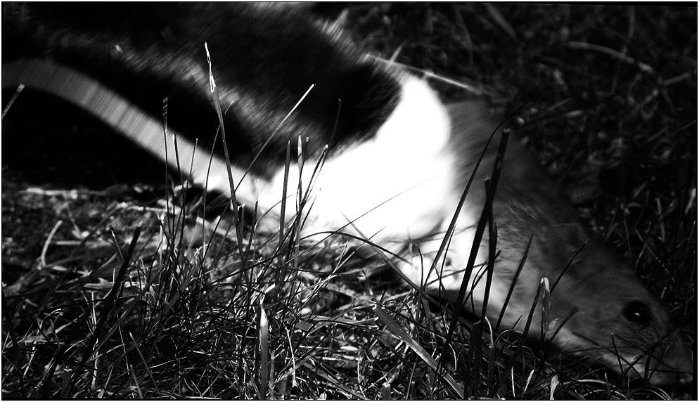 Tod im Gras