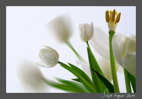 Tod und Auferstehung - Ostern